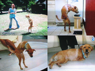 Faith The Bipedal Dog Anjing-Anjing Pemberi Inspirasi