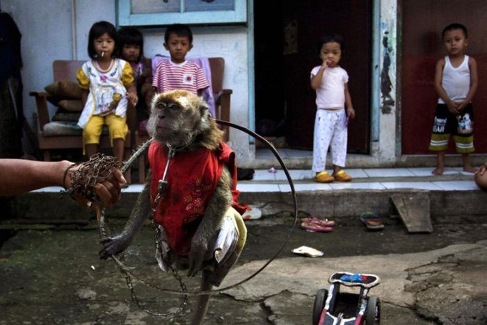 http://1.bp.blogspot.com/-GvpdXFeeTgc/Te5-E__5QPI/AAAAAAACLGI/ZyypPUnA6yg/s1600/performing_monkeys_12.jpg