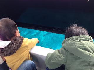 ブセナテラスのグラス底ボートを真剣に覗き込んでいる息子達