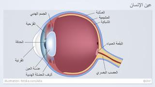 معجزة العين صور علمية عجيبة 0,,15260656_10,00.jp