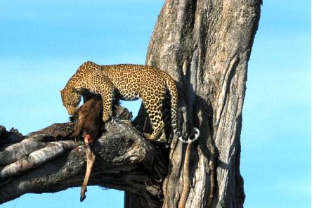 El Grillo Y El Jaguar La Selva Jan Barboglio The