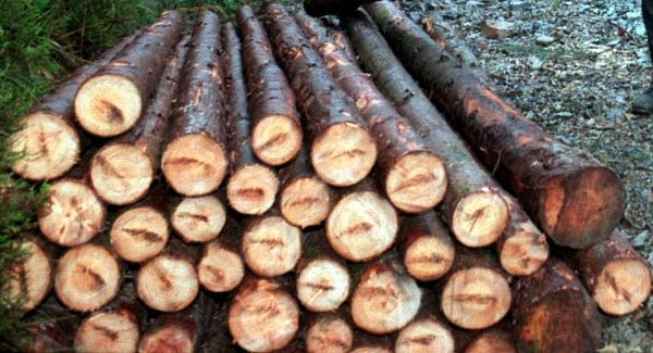 bio fuel potential with forestry