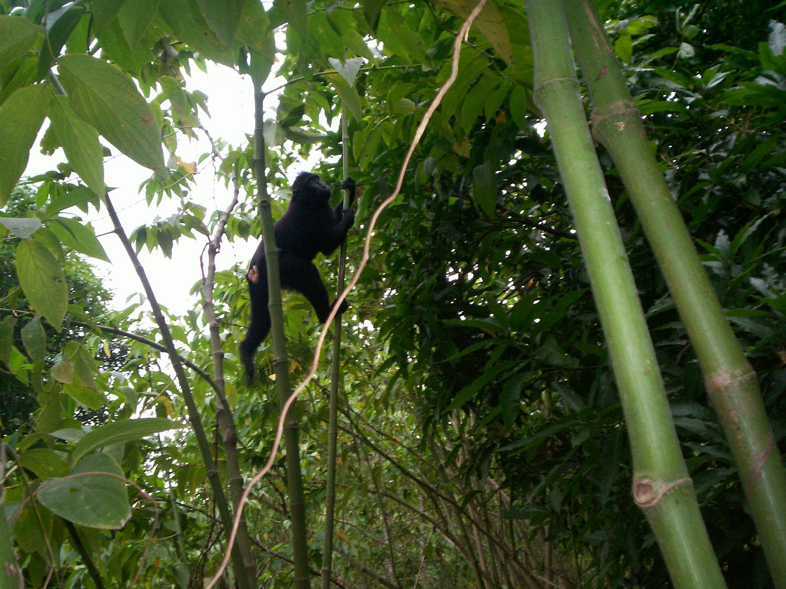 tangkoko trips and information