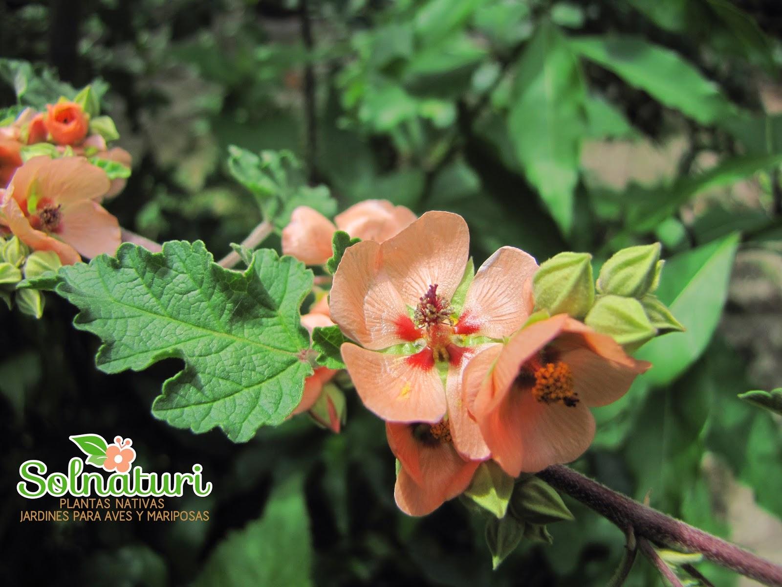 El blog de ecocasa nativas bajo el sol for Vivero plantas nativas