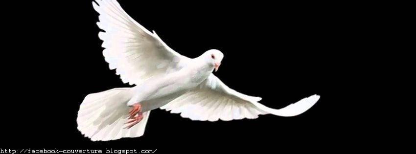 Couverture facebook HD les colombes oiseaux