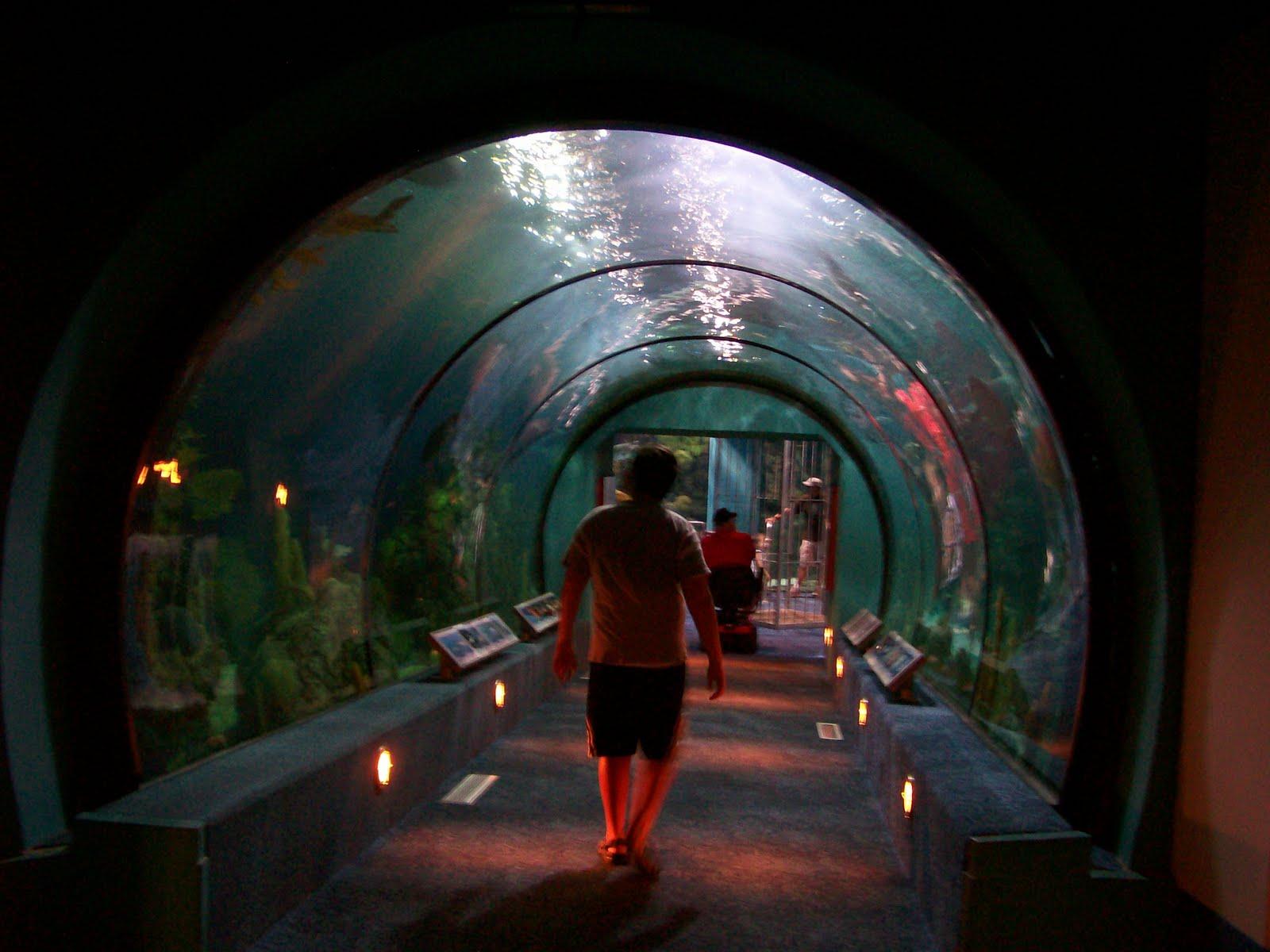 Rockhounding Around Galveston Trip The Aquarium At