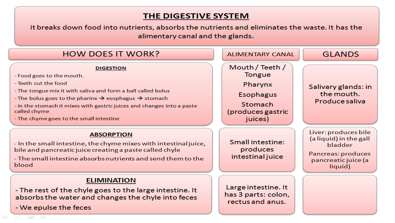 Natural Science 6 2 The Digestive System
