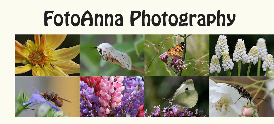 FotoAnna Photography