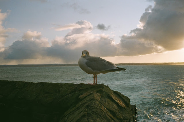 Sunset gull St Ives quay side Cornwall