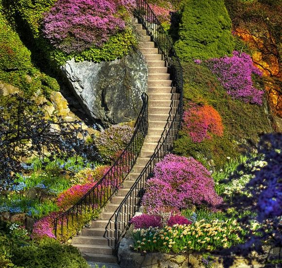 paisagem com escada no meio de plantas e flores de diversas cores