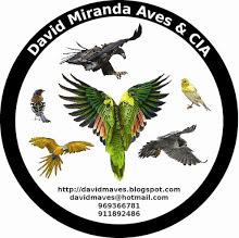 David Miranda Aves & CIA