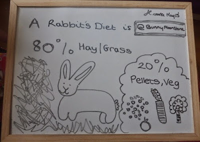 Looking After Your Rabbit (The Drawing Edition) for RAW