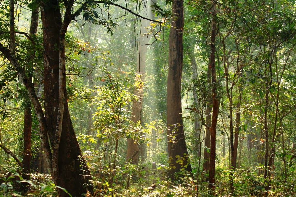 Enchanting forests of Dandeli Wildlife Sanctuary