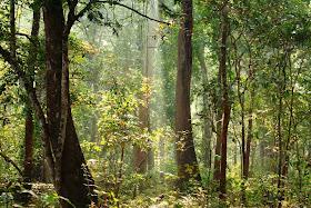 Enchanting forests of Dandeli Wildlife Sanctuary