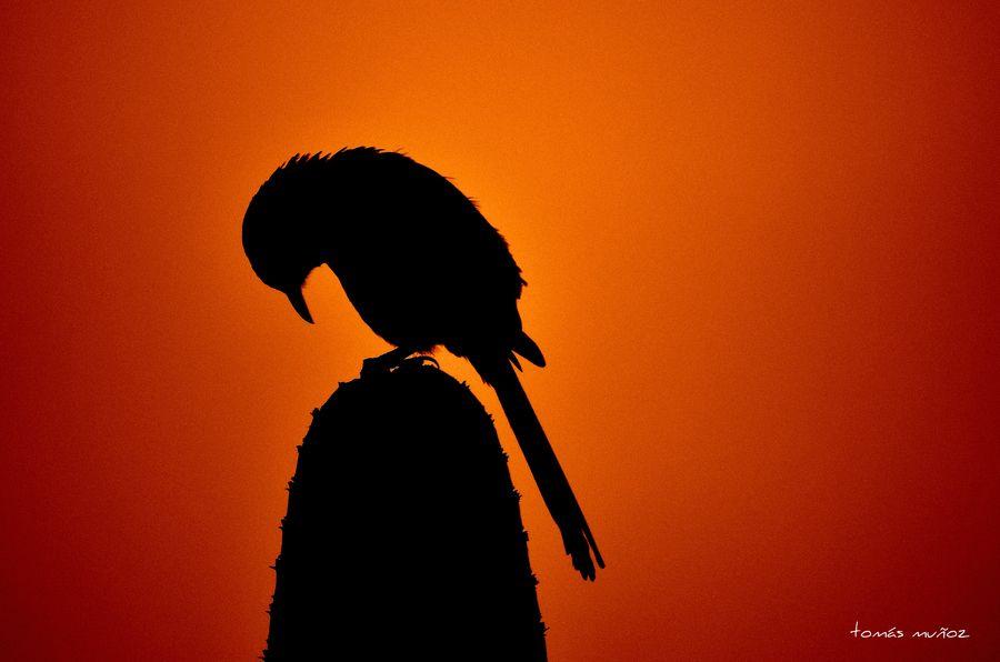 10. sleepy bird by Tomás Muñoz
