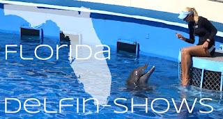 Beste Ort um Delfine zu sehen, Florida USA