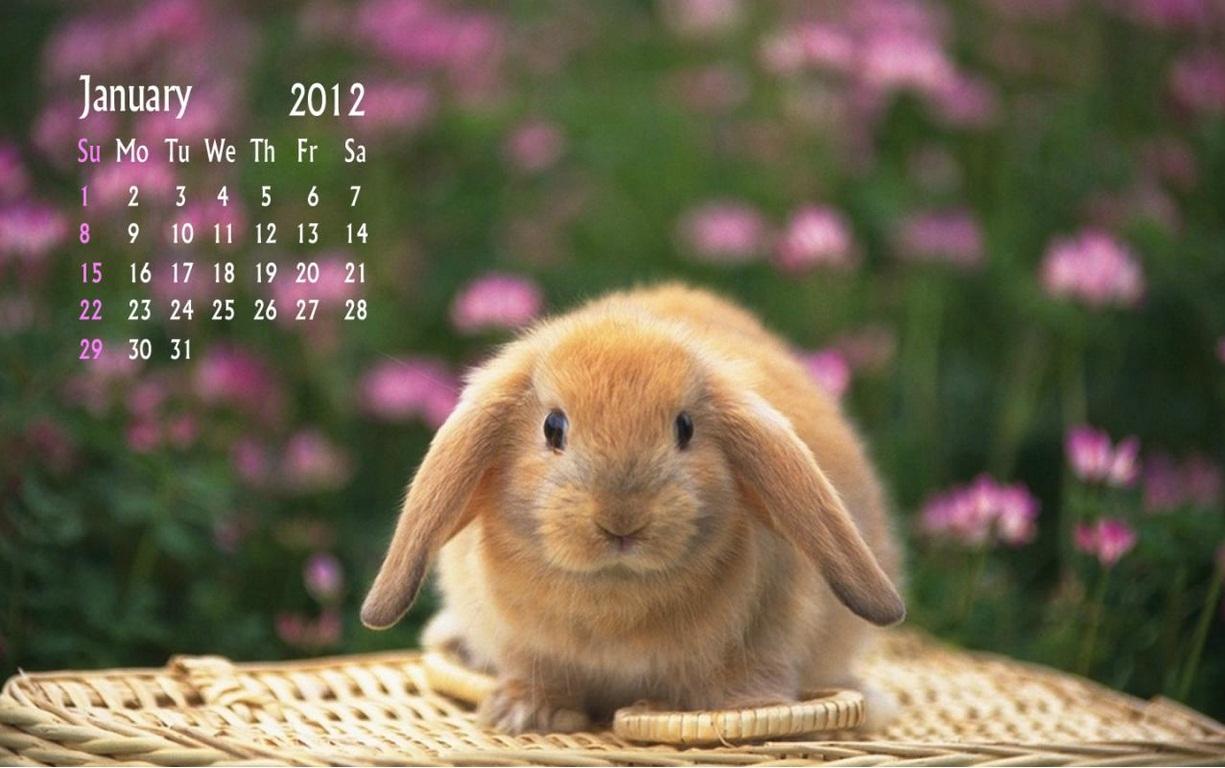 So beautiful bunny