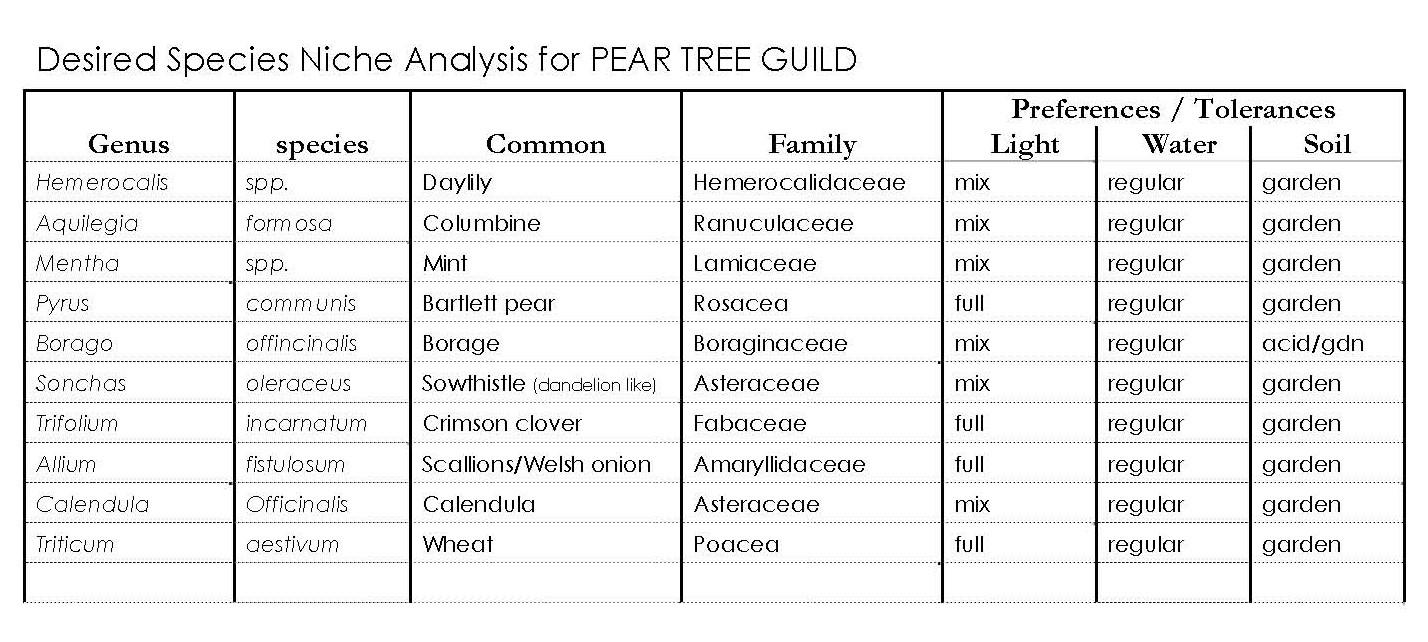 GAIA CREATIONS BEYOND COMPANION PLANTING Guild Building a – Sample Companion Planting Chart