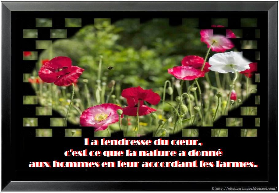 Belle citation sur la nature en image