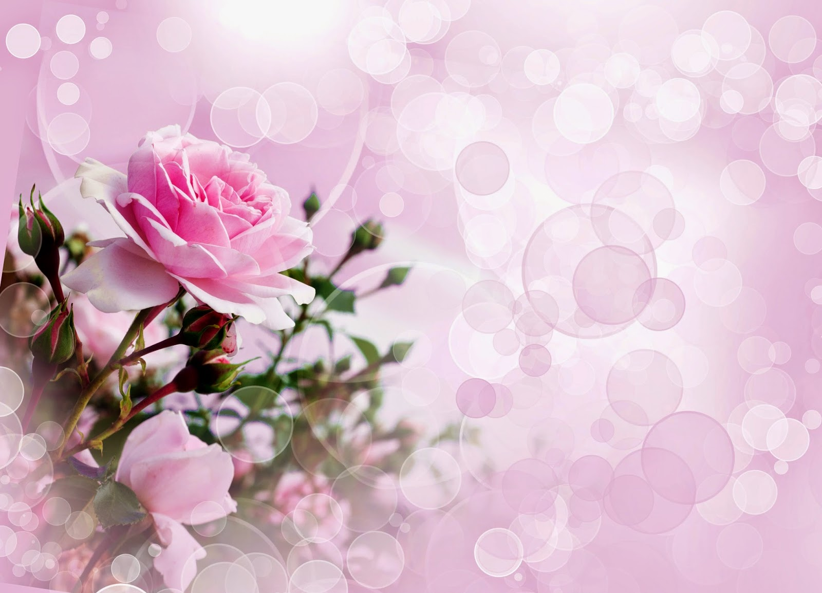 Красивые открытки на фоне цветов