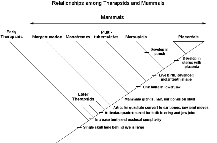 Dr Bein science Classification – Cladogram Worksheet