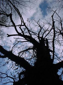 Progetto vajra perle nel tempo immagini foto art gallery incontri meditazione contemplazione zen albero vecchio