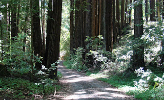 My trip to Portola Redwoods State Park was not as extensive as it could have/should have been