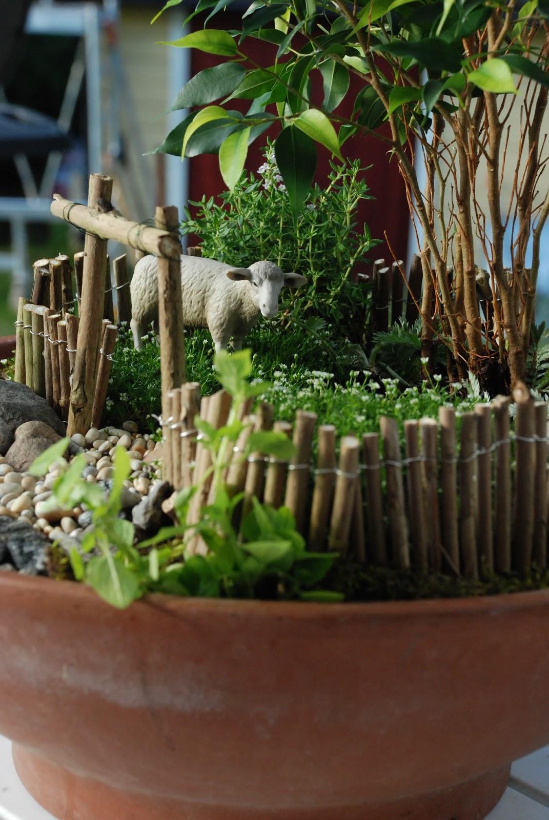En trädgård blir till: miniatyrträdgård