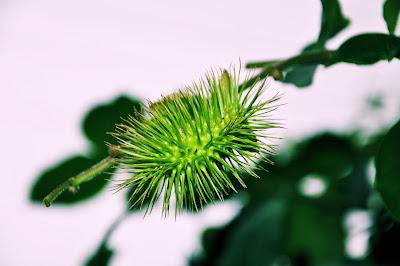 Flores silvestres Fuschia