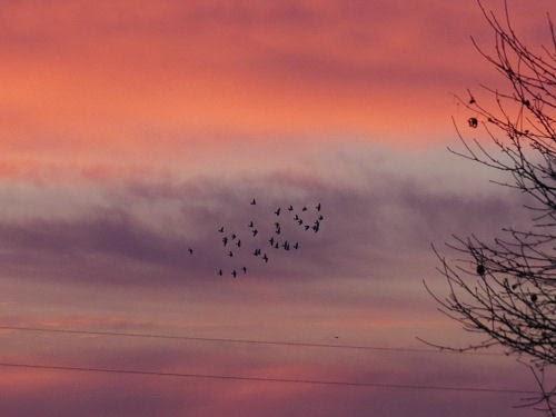 birds in the sunrise