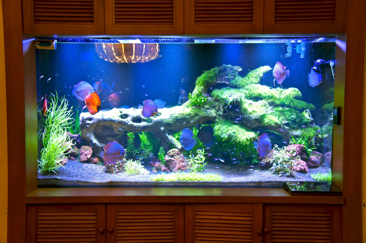 led aquarium lighting blog orphek orphek pr 72 led. Black Bedroom Furniture Sets. Home Design Ideas