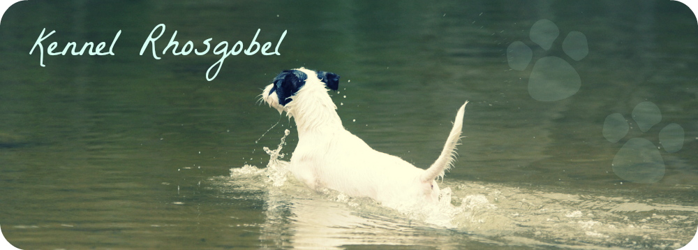 kennel Rhosgobel