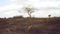 O desmatamento na caatinga