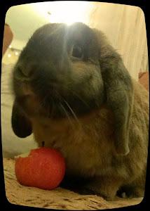 Sir Nomsalot - Financial Prognosticator, Rabbit, Citizen Liberty's Pet