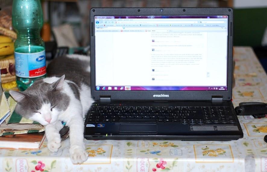 Ho sposato un beduino roba da gatti forniture per ufficio for Forniture per ufficio