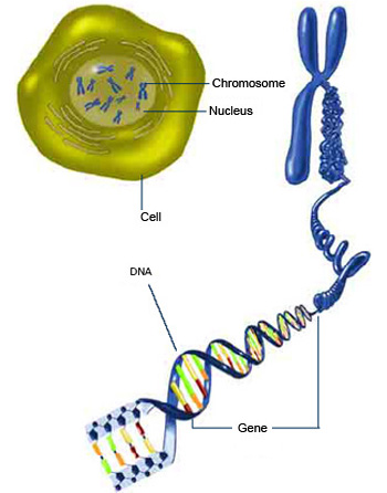 Unseen rare collection dna animationartworkgeneschromosomes dna and genes unseen rare wallpapers ccuart Choice Image