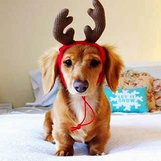 Cutie Pie Reindeer