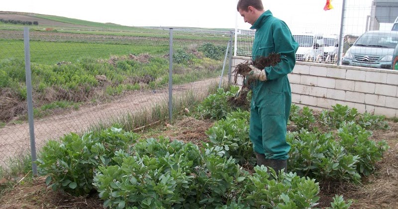 pcpi actividades auxiliares en viveros jardines y