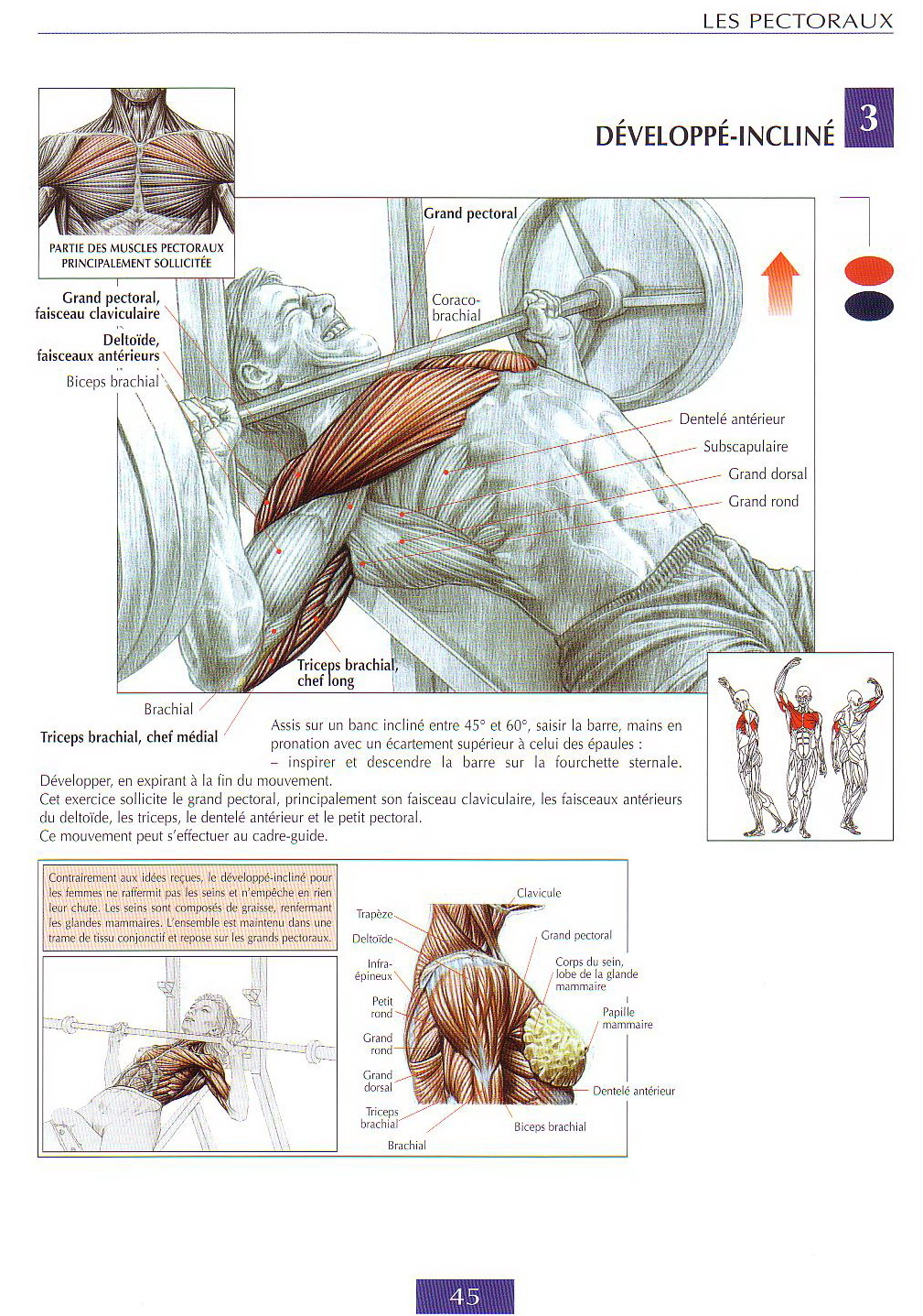 Best chest workouts guide de musculation for Guide musculation