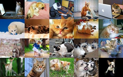 Mascotas divertidas y animales graciosos