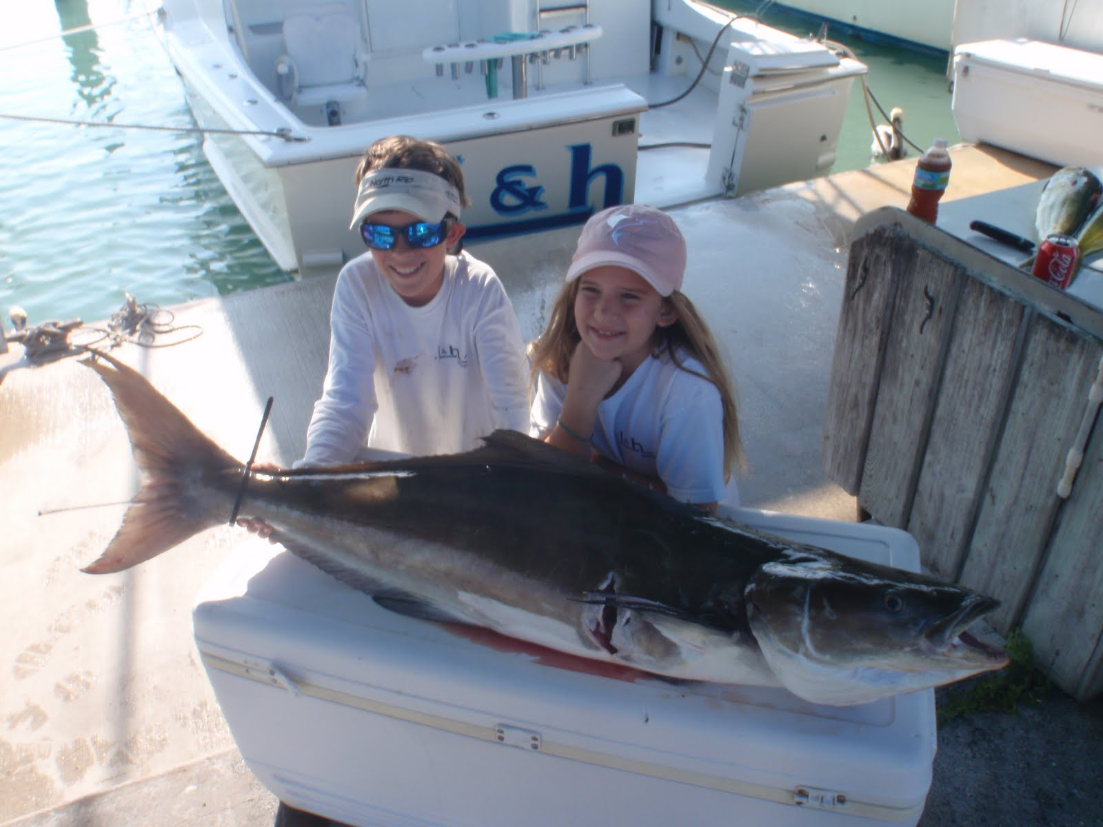 world record cobia