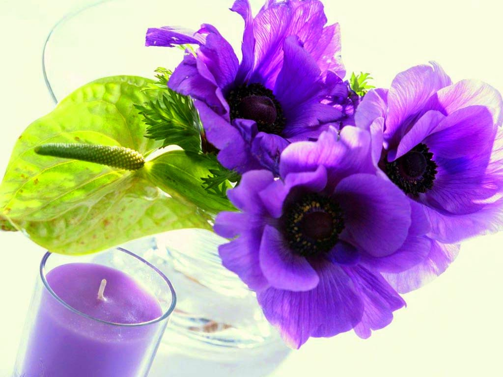 lovely-purpel-flowers-for-ur-luv