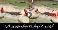 Alligator Attacking the Trainer