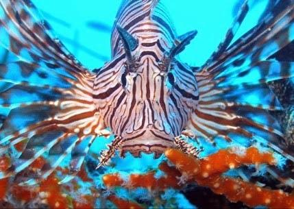 zeeduivel duikvakantie curacao