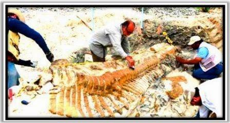 Pengertian Fosil : Apa itu Fosil ?.
