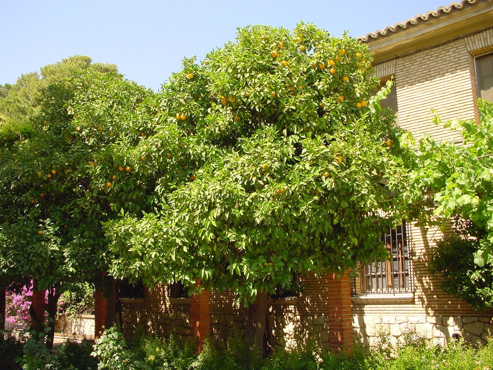 Jardineria eladio nonay jardiner a eladio nonay naranjo - Jardineria eladio nonay ...