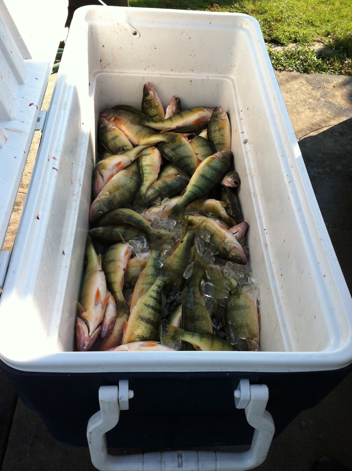Lake erie walleye fishing reports lake erie fairport for Odnr fishing report