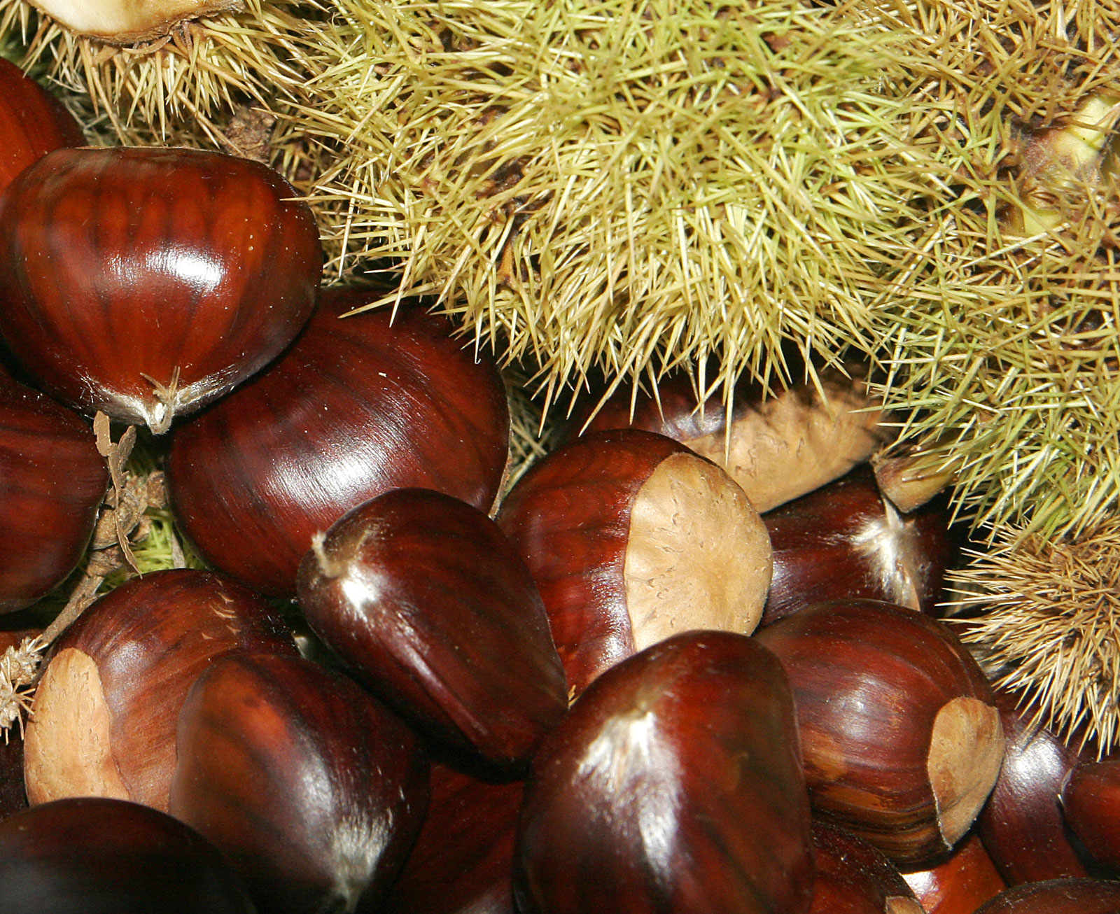 Retire from the usual in Liverpool, Nova Scotia : Chestnuts ...
