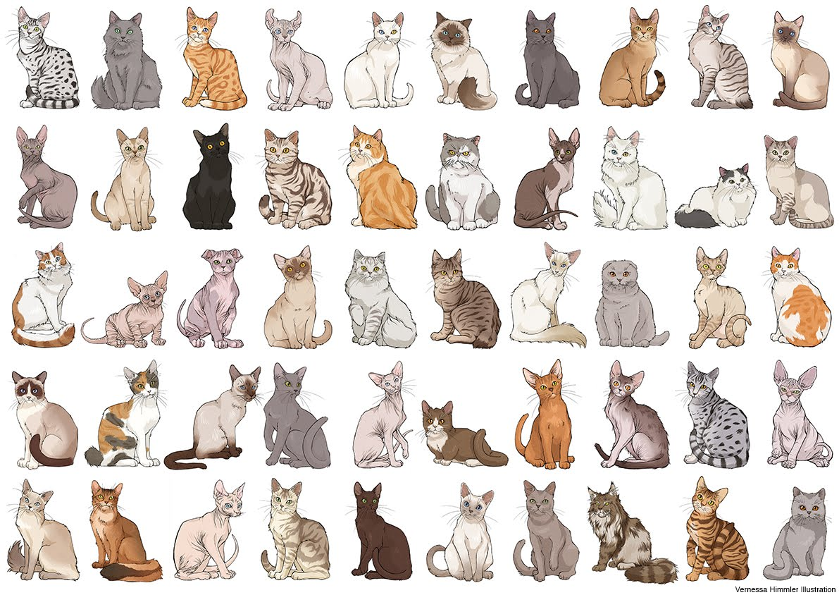 ILLUSTRACIENCIA List of Cat Breeds Vernessa Himmler
