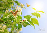 Kurs Masażu Dotyk Motyla